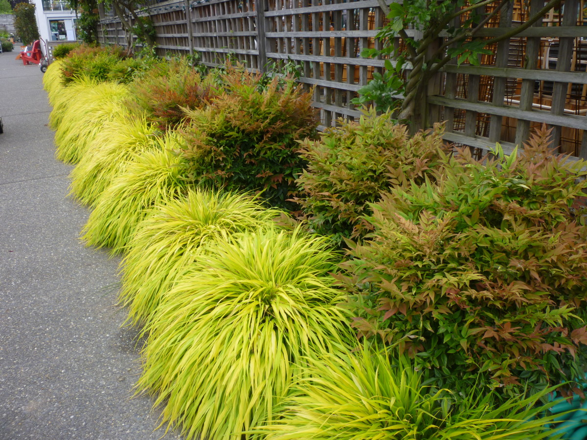 Perennials combs landscape for Tall ornamental grasses for shaded areas