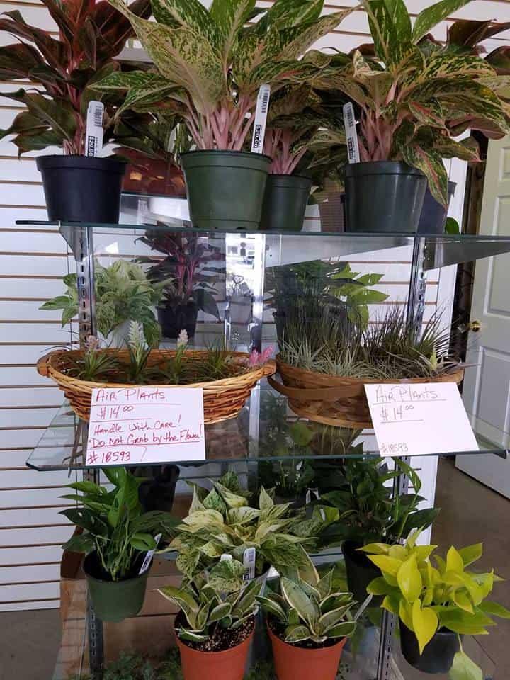 Evansville Plants